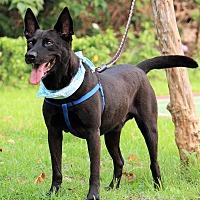 Adopt A Pet :: Yi-Lo - San Mateo, CA