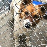 Adopt A Pet :: Jasmine - Boulder, CO