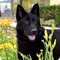 Adopt A Pet :: Sheriff - San Diego, CA