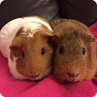 Adopt A Pet :: Beatrix and Helen - Fullerton, CA