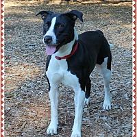 Adopt A Pet :: BRIDGET - Guest - Marietta, GA
