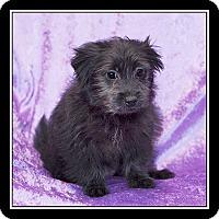 Adopt A Pet :: Erin - San Diego, CA
