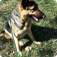 Adopt A Pet :: Larson - Sarasota, FL