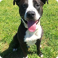 Adopt A Pet :: Smokey - Corning, CA