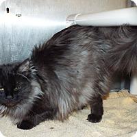Adopt A Pet :: Allie - Shelby, MI