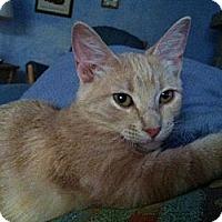 Adopt A Pet :: Wilson - Phoenix, AZ