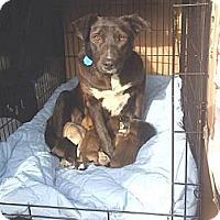 Adopt A Pet :: Maggie - Alliance, NE