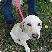 Adopt A Pet :: Murphy - Chicago, IL