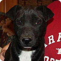 Adopt A Pet :: Oreo - PENDING, in Maine! - kennebunkport, ME