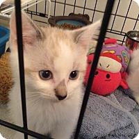 Adopt A Pet :: Beckett - Irvine, CA