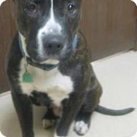 Adopt A Pet :: Farrah - Gary, IN