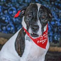 Adopt A Pet :: MALACHI (JW) - Tampa, FL
