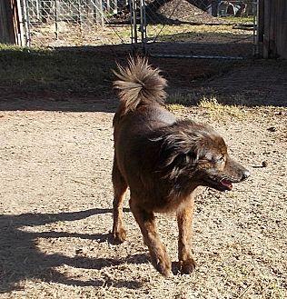 Australian Terrier/Border Terrier Mix Dog for adoption in Girard, Georgia - Kaspersky