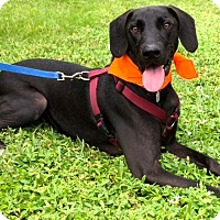 Adopt A Pet :: Ready, Set, Go!! - Ft Myers Beach, FL
