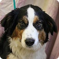 Adopt A Pet :: Nemo - Roosevelt, UT