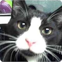 Adopt A Pet :: Sammy & Lila - Moses Lake, WA