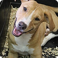 Adopt A Pet :: Esmerelda - Bedminster, NJ