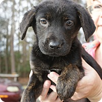 Adopt A Pet :: Lilly - Randolph, NJ