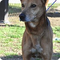 Adopt A Pet :: Waka - Colonial Heights animal shelter, VA
