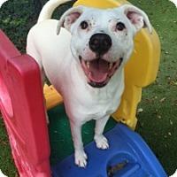 Adopt A Pet :: Portia - Tallahassee, FL