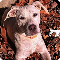 Adopt A Pet :: Nellie - Pulaski, TN