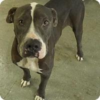 Adopt A Pet :: Ranger - Hardeeville, SC