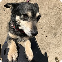 Adopt A Pet :: Peaches - Los Angeles, CA