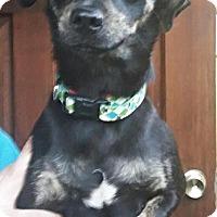 Adopt A Pet :: Roxy - Osteen, FL