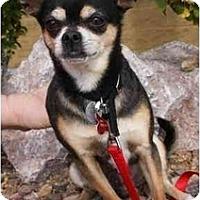 Adopt A Pet :: Chalupa - Gilbert, AZ