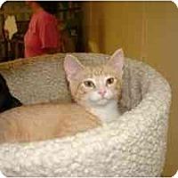 Adopt A Pet :: Benji - Milwaukee, WI