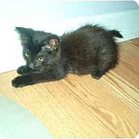 Adopt A Pet :: Jacob - Lake Charles, LA