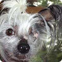 Adopt A Pet :: Pia (ME) - Gilford, NH