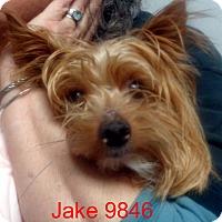 Adopt A Pet :: Jake - Greencastle, NC