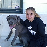 Adopt A Pet :: zeus - Lucerne Valley, CA
