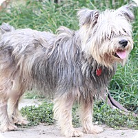 Adopt A Pet :: Harrison - Norwalk, CT