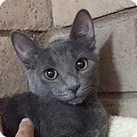 Adopt A Pet :: Lily - Phoenix, AZ