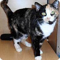 Adopt A Pet :: Capri - Chattanooga, TN