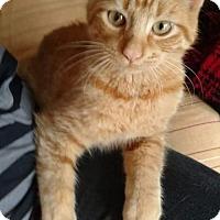 Adopt A Pet :: Milo - Taylor, MI