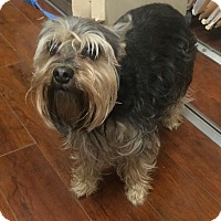 Adopt A Pet :: Johnny - Oak Ridge, NJ