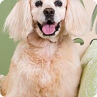 Adopt A Pet :: Sadie - Owensboro, KY