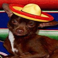 Adopt A Pet :: BUZZ - Upland, CA