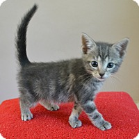 Adopt A Pet :: Zayne - Springfield, IL