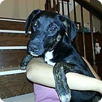 Adopt A Pet :: Mack (low adoption fee!) - South Jersey, NJ