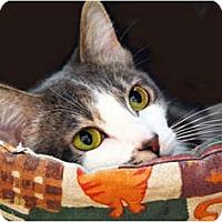 Adopt A Pet :: Eulalie - Encinitas, CA