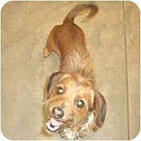 Adopt A Pet :: Sigmund - Phoenix, AZ