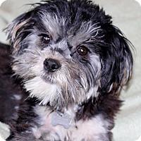 Adopt A Pet :: Phannie - San Pedro, CA