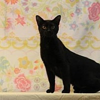 Adopt A Pet :: Ninja - Sebastian, FL