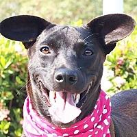 Adopt A Pet :: MeiBoa - San Francisco, CA