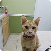 Adopt A Pet :: Leo - Lighthouse Point, FL