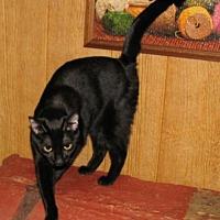 Adopt A Pet :: Valimai (adult female) - Harrisburg, PA